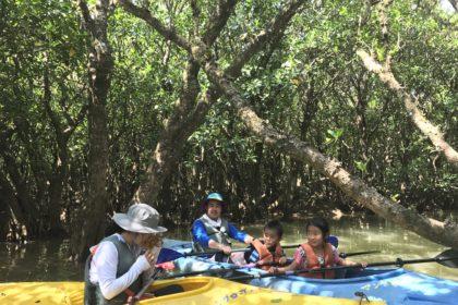 Mangrove canoeing in Amami Ōshima.