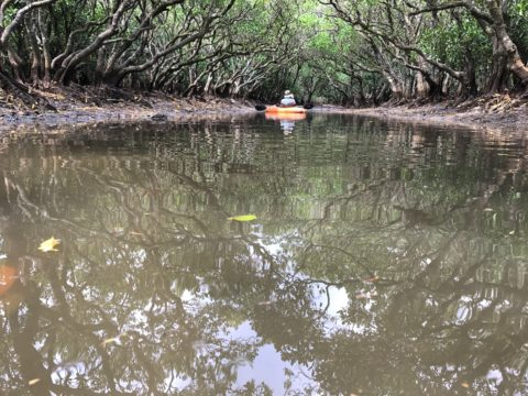 Mangrove canoeing tour by Low Key Amami.
