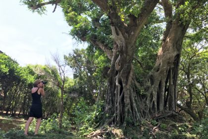 A French traveller with a banyan tree in Amami Ōshima.