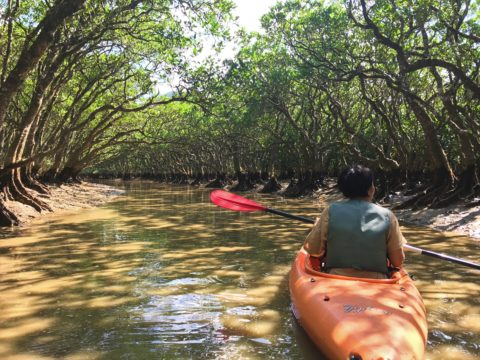 Canoeing at the mangrove forest in Amami Ōshima.